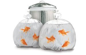 金魚鉢に見立てたゴミ袋。癒されます。